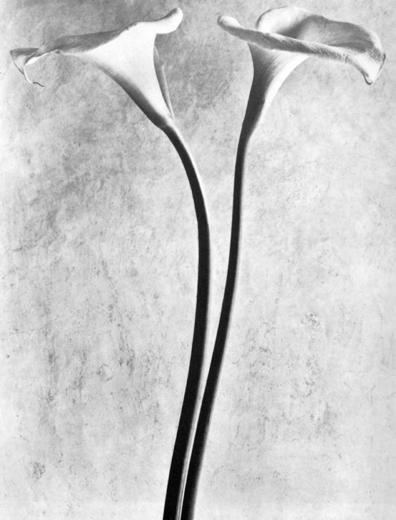 Tina-Modotti-Calle-1927